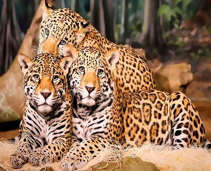 Картина по номерам 40x50 Семейство леопардов